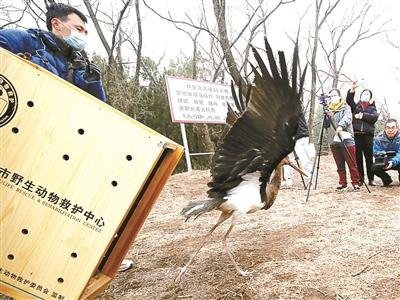 北京陆生脊椎野生动物增加多五百多余种