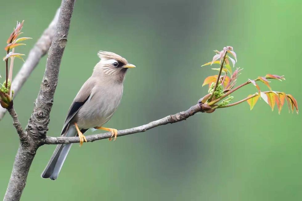 神农架发现两种湖北省鸟类新记录种